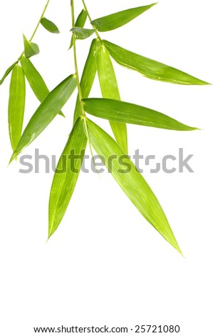 The verdure bamboo leaves - stock photo