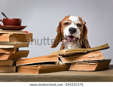 The very smart dog studying old books - stock photo