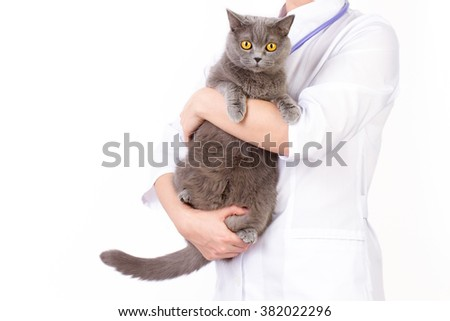 The veterinarian holds a cat in her arms on white background - stock photo