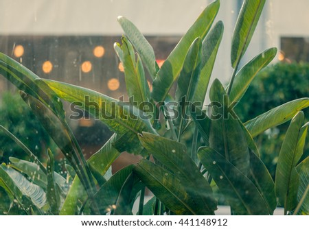The view from the cafe window at the palm tree banana leaves - stock photo