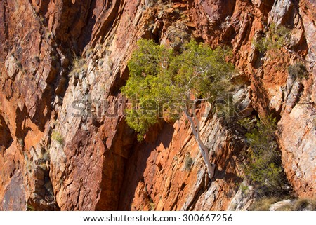 The view from the Serpentine Gorge Lookout of an Australian gum tree growing from the rock face near Alice Springs, Northern Territory, Australia - stock photo