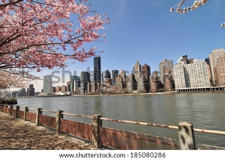 The view under cherry blossoms from a Roosevelt Island promenade over the East River to Manhattan, New York. - stock photo