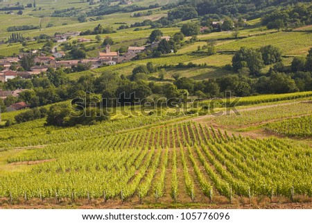 The village of Chasselas amongst the vineyards of Burgundy near Macon.