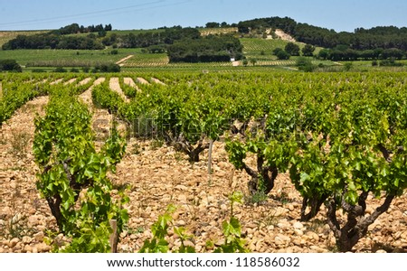 The Vineyards of Ch�¢teauneuf-du-Pape