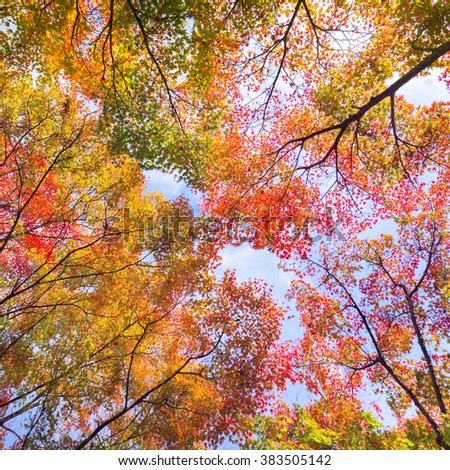 The warm autumn sun shining through colorful treetops, with beautiful bright blue sky. Square composition. - stock photo