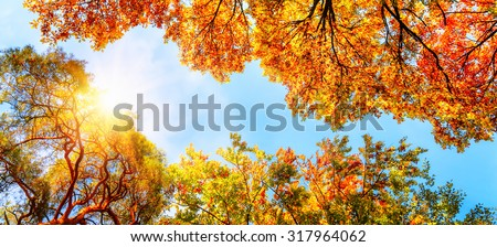 The warm autumn sun shining through golden treetops, with beautiful bright blue sky - stock photo