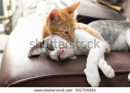 The Warmest Hug from two kitten - stock photo