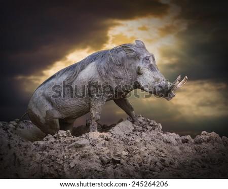 The Warthog (Phacochoerus africanus) in a mud. Dangerous african mammal. - stock photo