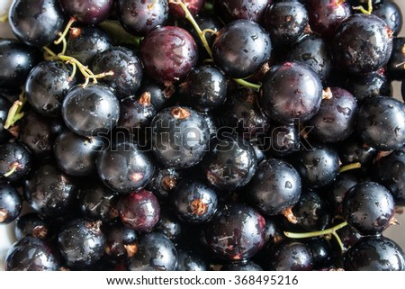 the washed blackcurrant berries with water drops - stock photo