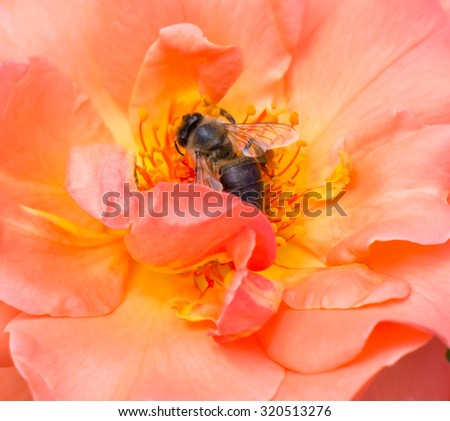 The wasp sitting on a flower. - stock photo