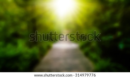 The way wood in the forest spring perspective green  with yellow sun light ,success symbol nature trees  background - stock photo