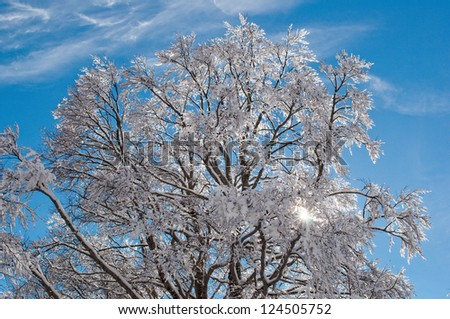 the weak winter sun will make their way through snowy branches of a beech - stock photo