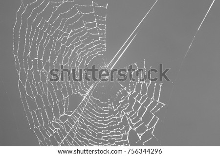 the web almost finished