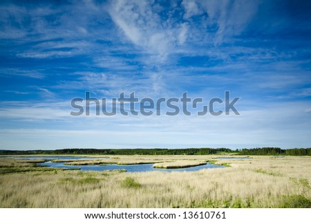 The wetland marshes from eastern of Finland - stock photo