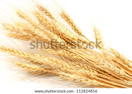 the wheat on a white background - stock photo