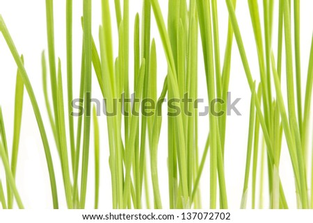 The wheat plant close up image at the white background - stock photo