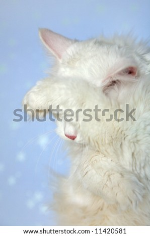 The white cat has hidden eyes a paw. A shame or shyness - stock photo