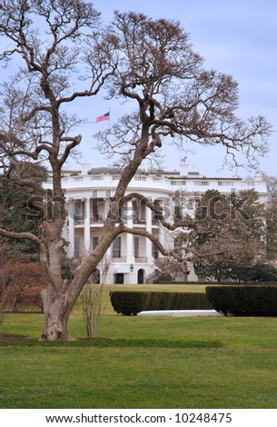 The White House Through Tree - US flag framed by branches - stock photo