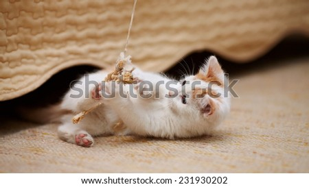 The white kitten plays with a toy. White with red a kitten. Small predator. Small cat. - stock photo