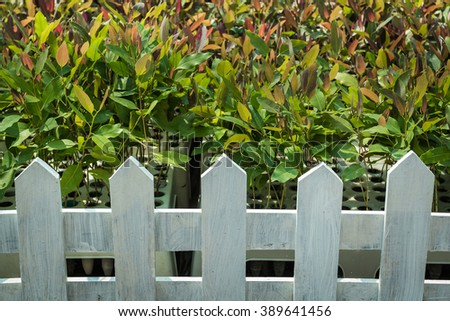 The white wooden fence Used as a defense in the planted eucalyptus.  The white wooden fence Used as a defense in the planted eucalyptus. - stock photo