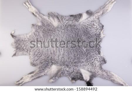 The whole gray sheep fur piece, object shot - stock photo