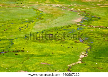 the wide green valley with the rivers and the grazed animals in the early spring, in a sunny day - stock photo