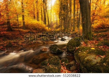 The wild creek winds its way through the colorful forest in the Harz