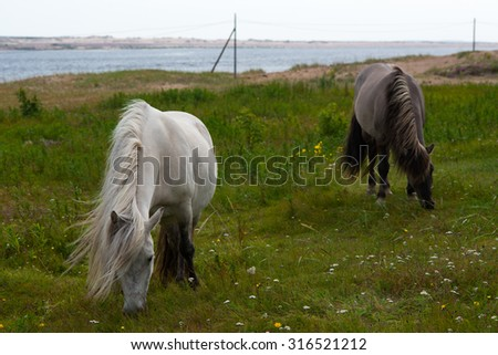 the wild horse eats on a meadow