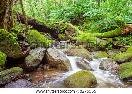 The wild stream in the lush jungle. - stock photo