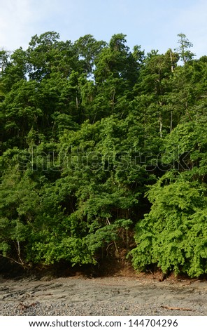 The wilderness and trees in tropical rainforest in Panama