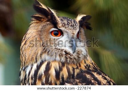 The wildlife bird reserve in the city of Knokke in belgium. An owl looking for prey. - stock photo