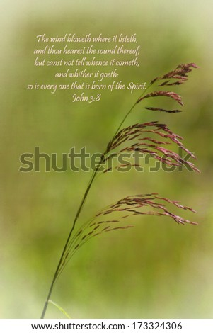 The Wind Of The Holy Spirit with Prairie Grass Background - stock photo