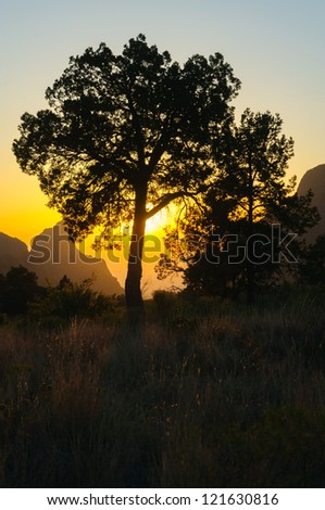 The Window formation and surrounding trees at sunset in the Chisos Mountain Basin section of Big Bend National Park - stock photo