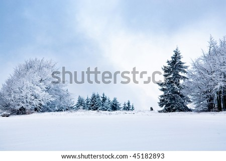 The winter forest scene. Snowy landscape.
