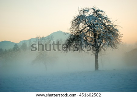 The winter with snow, fog, and naked trees - stock photo