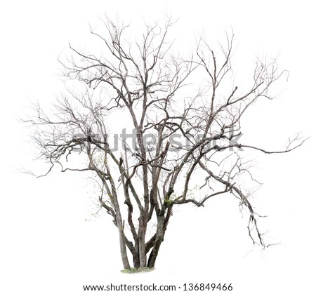 The withered trees? isolated on white background - stock photo