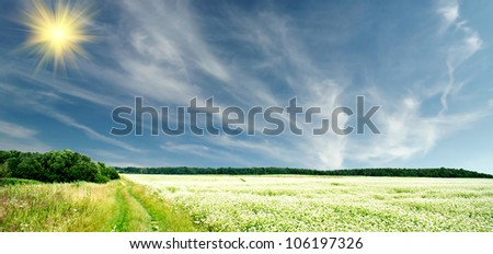 The wonderful field of buckwheat before the rain. - stock photo