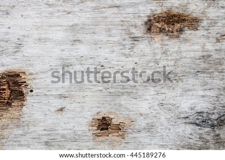 The Wood background, Wood surface, Wood texture
