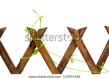 The wood fence with climbing plant isolated - stock photo