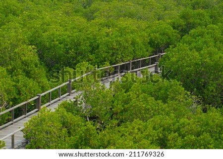The wooden bridge in mangrove forest. - stock photo