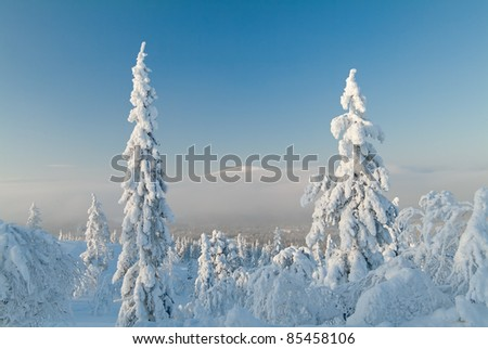 The woods in the snow. Lapland. - stock photo