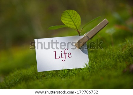 The word Life on paper with a seedling - stock photo