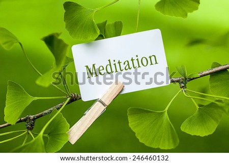 The Word  Meditation in a Ginkgo Tree - stock photo