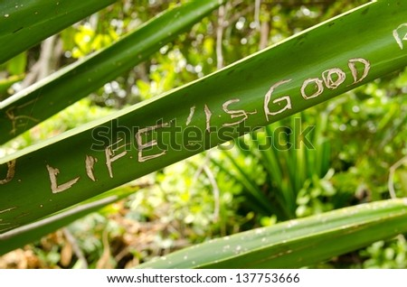 the words Life is Good scratched into a plant on The Road To Hana is Maui. - stock photo
