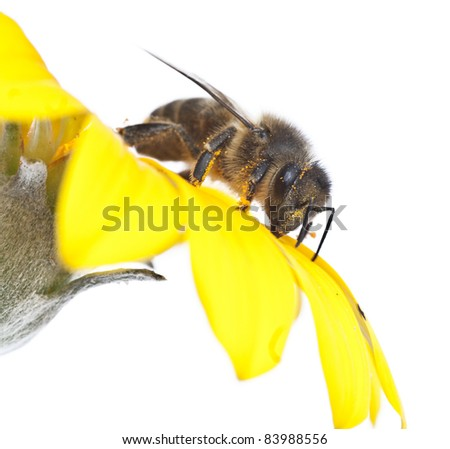 the worker insects - stock photo