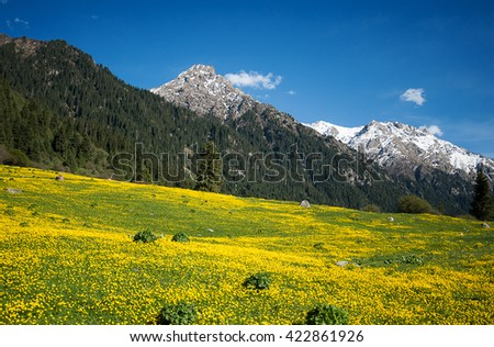 The yellow field in mountains