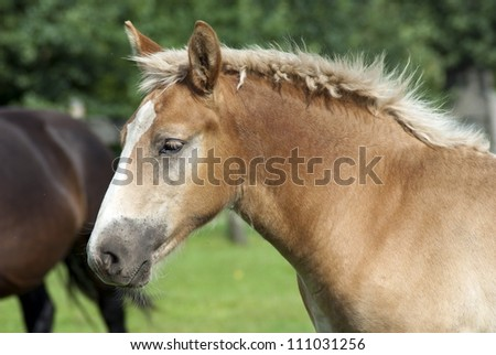 The young colt on the catwalk - stock photo