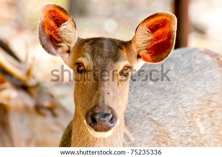 The Young deer in the zoo - stock photo