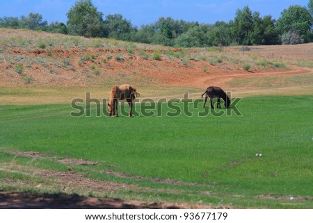 The young horse and donkey in summer pasteurage