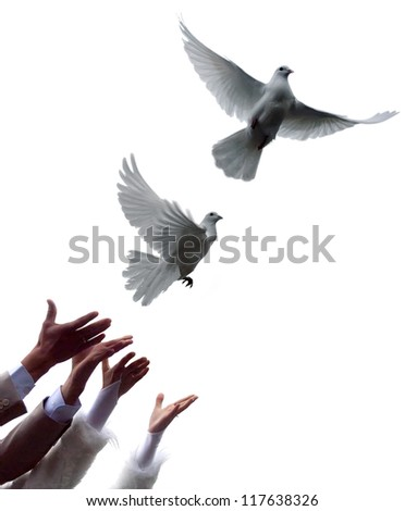 the young pair lets out pigeons - stock photo